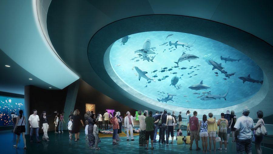 occulus-at-Aquarium-Mezzanine-Frost-Science-Museum-1