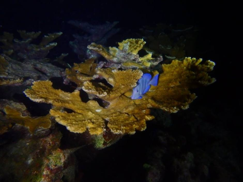 Blue-Fish-Night-Dive.jpg