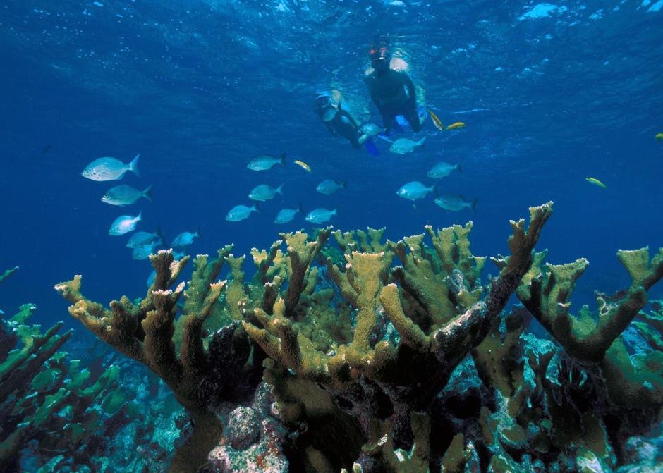 Elkhorn_Coral_Biscayne_NP1